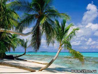 Какой климат в сочи тропики или субтропики
